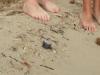 spiaggia-marina-di-salve-tartaruga-nata