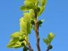 pianta-di-fico-con-frutto-salento