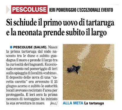 La prima Tartaruga raggiunge il mare nel pomeriggio del 3 Settembre. L'articolo della Gazzetta del Mezzogiorno del 4 Settembre 2013